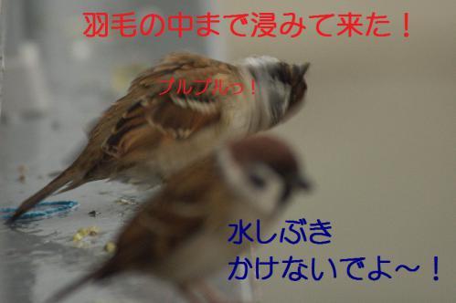 080_20121117212611.jpg