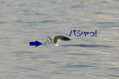 080_20121125192224.jpg