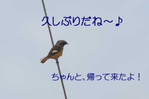 080_20121126223055.jpg