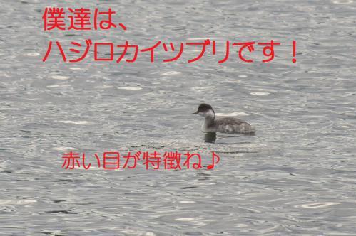 080_20121201214807.jpg