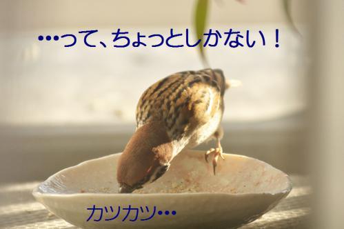 080_20121202191714.jpg