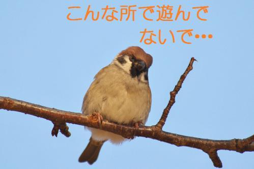 080_20121206193415.jpg