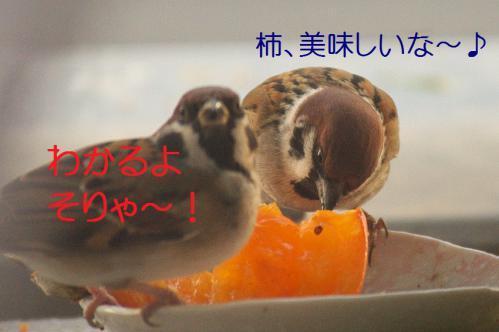 080_20121212214524.jpg