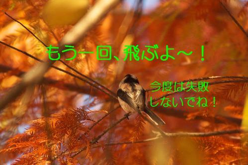 080_20121213214631.jpg
