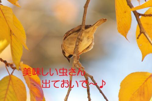 080_20121214214820.jpg