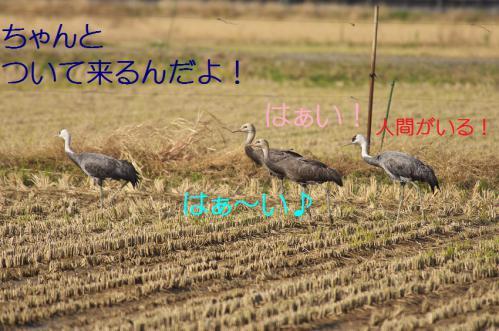 080_20121215200138.jpg