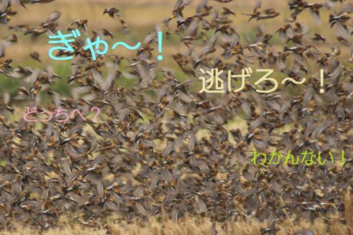 080_20121220193600.jpg