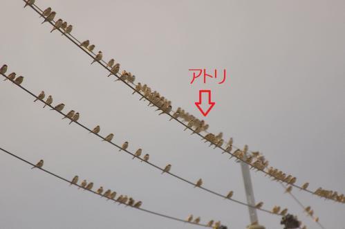 080_20121221214941.jpg