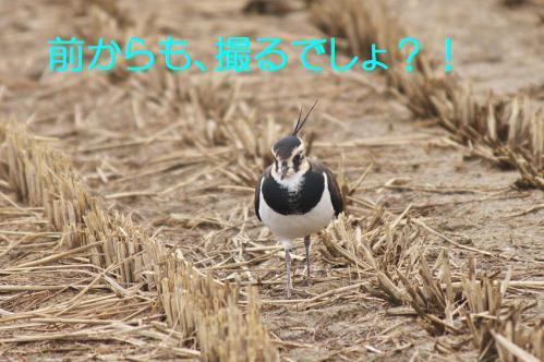080_20121222194507.jpg