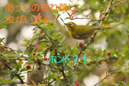 080_20121225223347.jpg