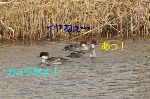 080_20121227213547.jpg