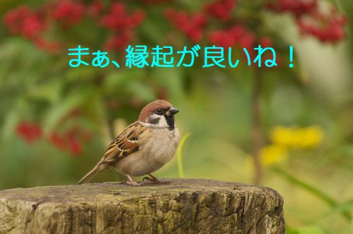 080_20121228215744.jpg