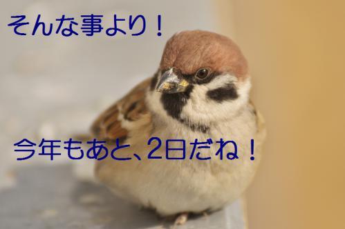 080_20121229231723.jpg