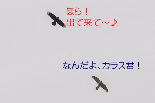 080_20130105211113.jpg
