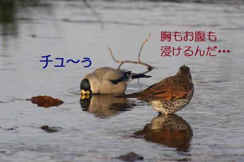 080_20130121215334.jpg