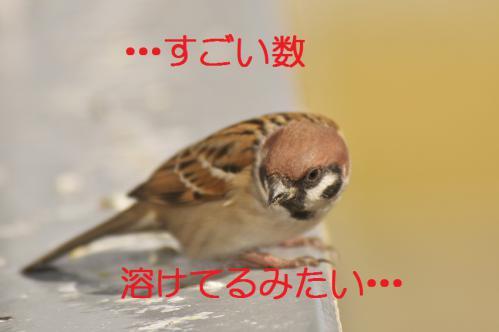 085_20121220193602.jpg