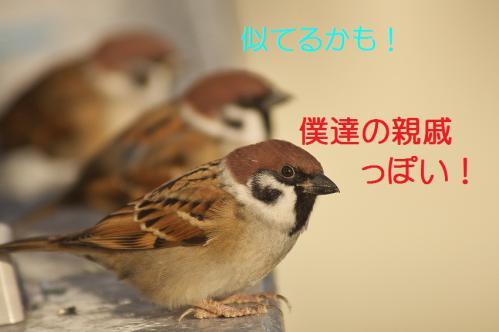 087_20121221215028.jpg