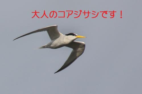 088_20121009191543.jpg