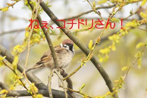 090_20120426195349.jpg
