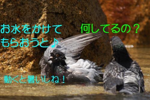 090_20120501203932.jpg