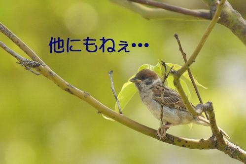 090_20120531225209.jpg