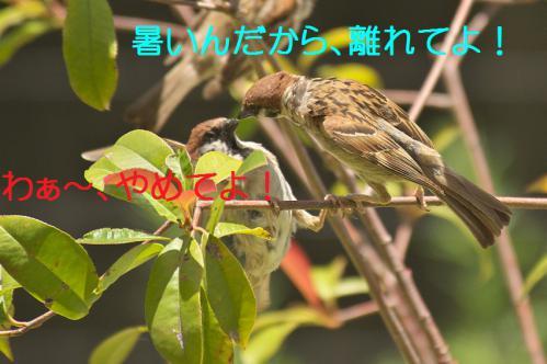 090_20120731204637.jpg