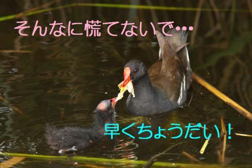 090_20120821211010.jpg