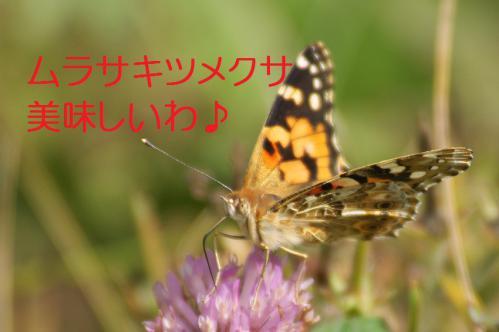 090_20120930203645.jpg