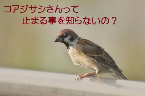 090_20121009191543.jpg