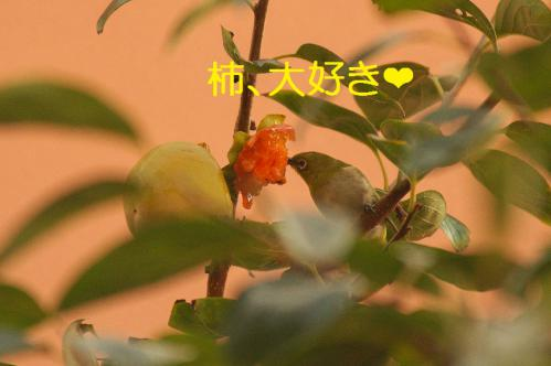 090_20121030223207.jpg