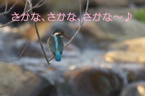 090_20121102220218.jpg