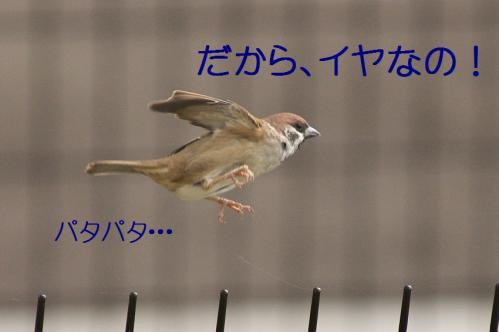090_20121103224852.jpg
