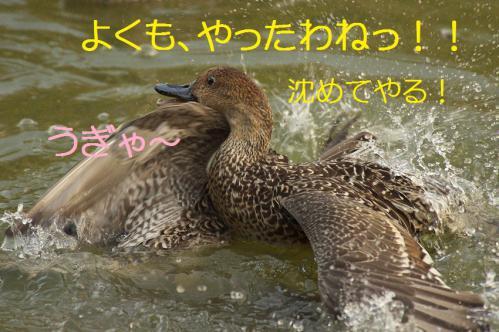 090_20121112215354.jpg