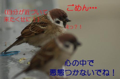 090_20121117212614.jpg