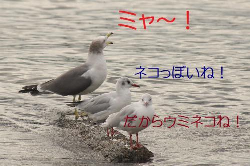 090_20121124215402.jpg