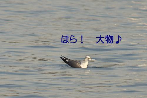 090_20121125192231.jpg