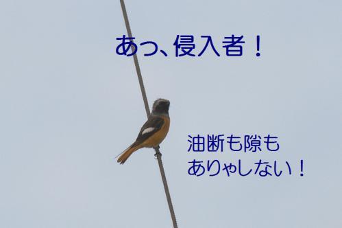 090_20121126223057.jpg
