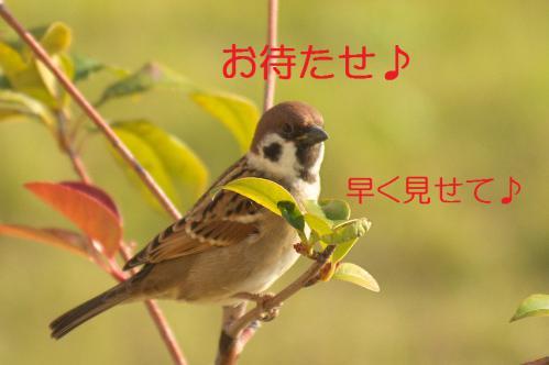090_20121130220648.jpg