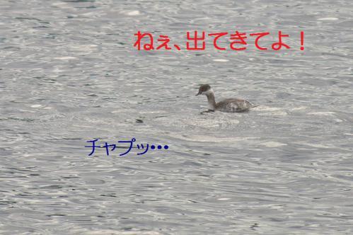 090_20121201214810.jpg