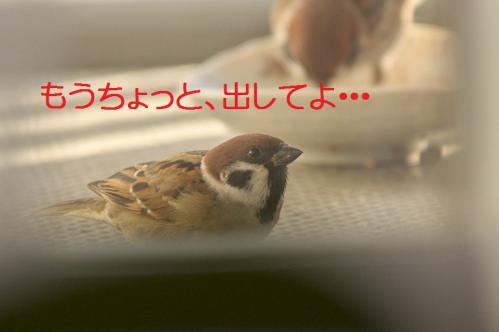 090_20121202191716.jpg