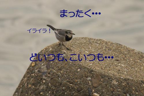 090_20121205221452.jpg