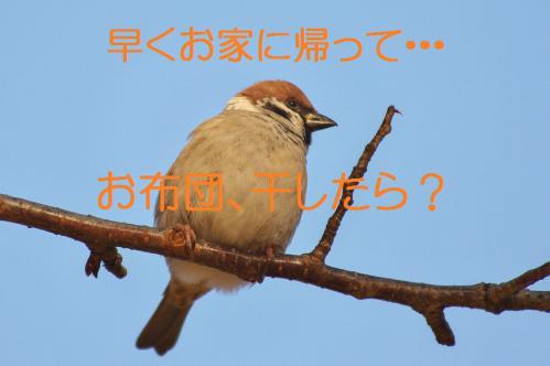 090_20121206193419.jpg