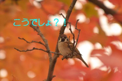 090_20121206222504.jpg