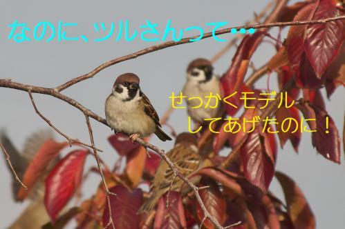 090_20121209222838.jpg