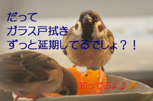 090_20121212214527.jpg