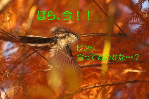 090_20121213214636.jpg