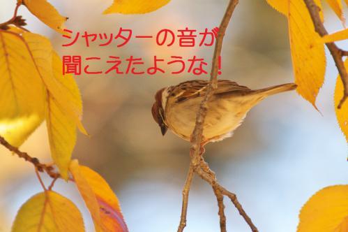 090_20121214214822.jpg