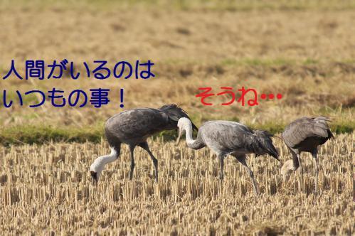 090_20121215200827.jpg
