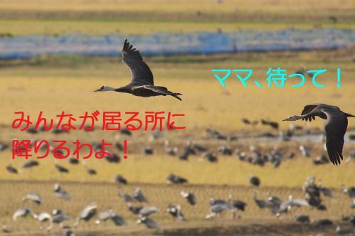 090_20121216202811.jpg