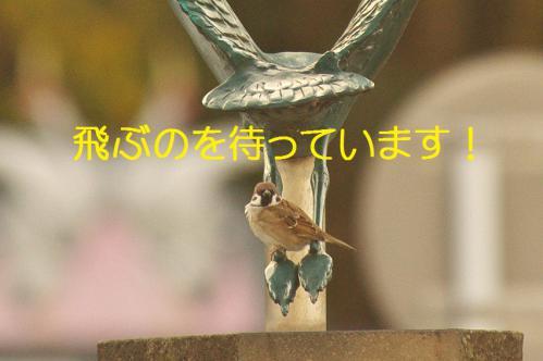 090_20121217024602.jpg